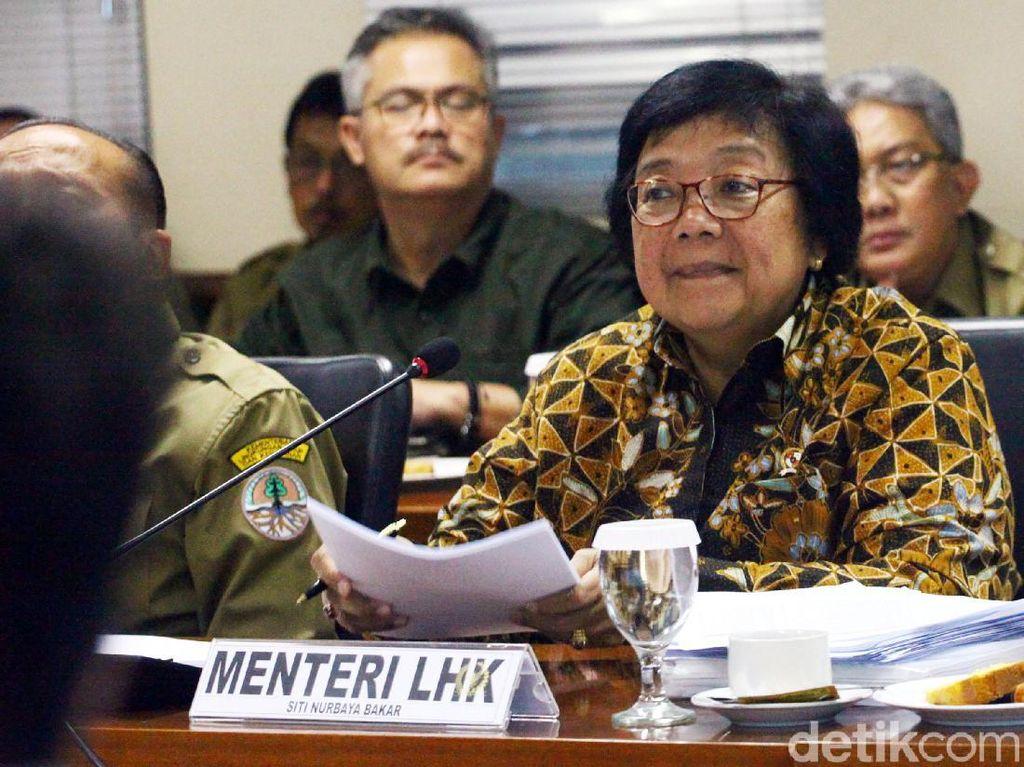 Rapat Bareng Komisi IV, Menteri LHK Ungkap 637 Ha Lahan Gambut-Mangrove Kritis