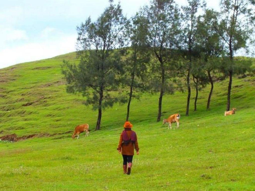 Timor Tengah Selatan, Destinasi Wisata Kebanggaan NTT
