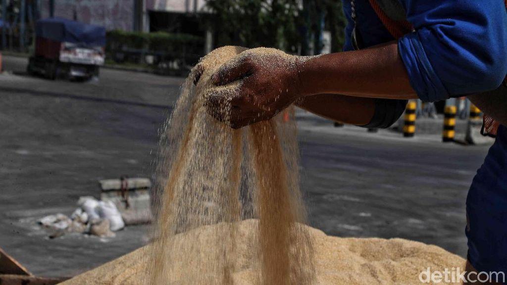 Dilema Gula Impor di Indonesia