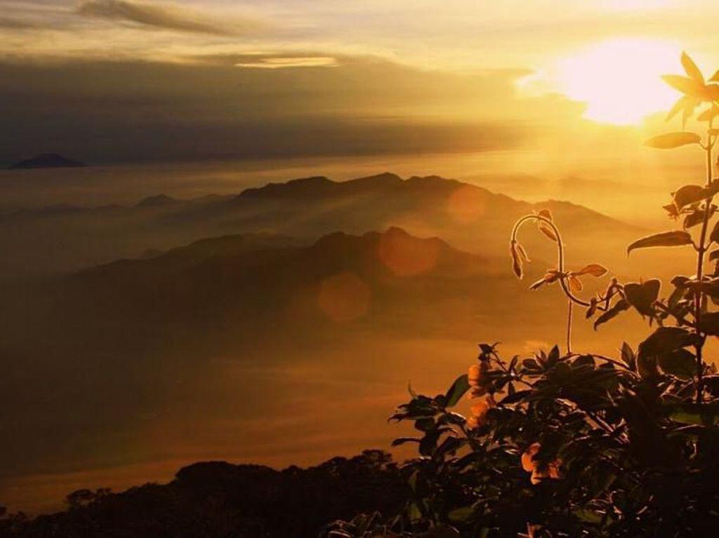 Inilah Sunrise Terbaik dari Puncak Gunung Cikuray Garut