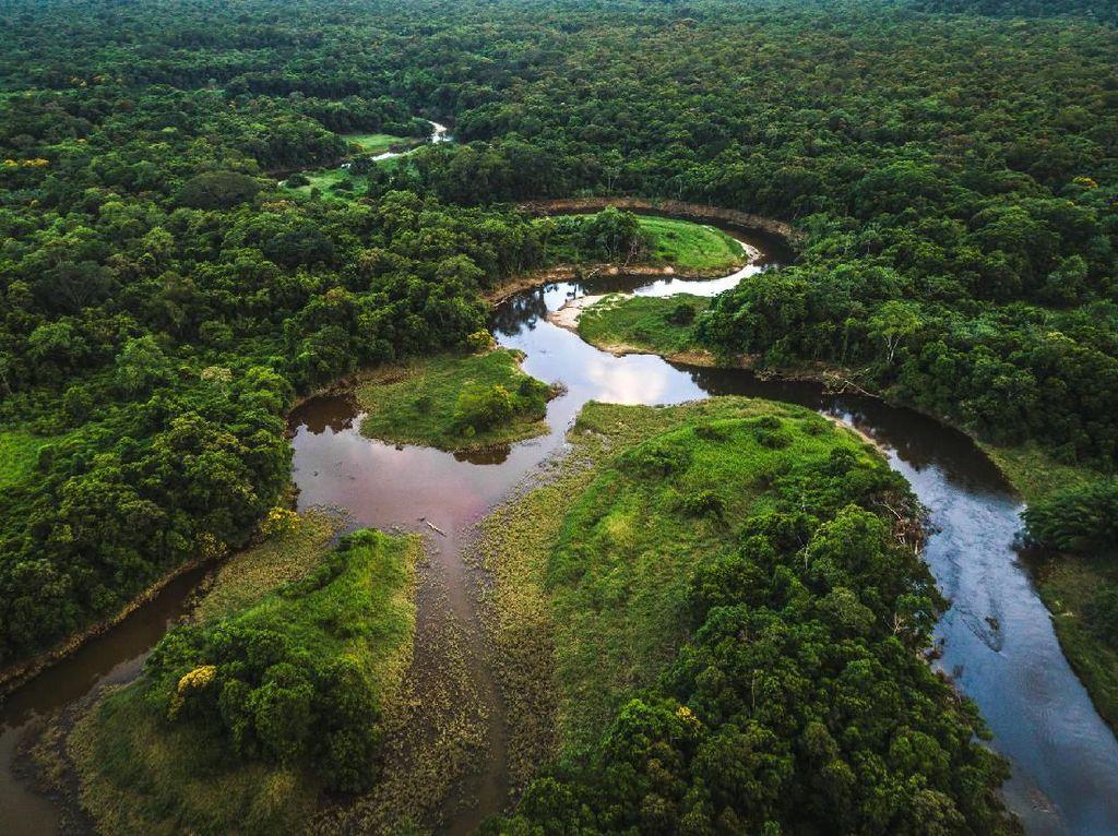 Tolong Jangan Eksploitasi Amazon untuk Pulihkan Ekonomi Usai Pandemi