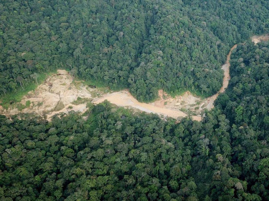 Waduh! Ada Tambang Emas Ilegal di Hutan Lindung