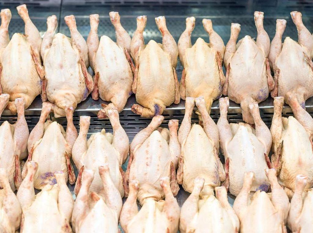 Pria Ini Nekat Curi 10 Ribu Ekor Ayam dan Chicken Wings untuk Bayar Judi