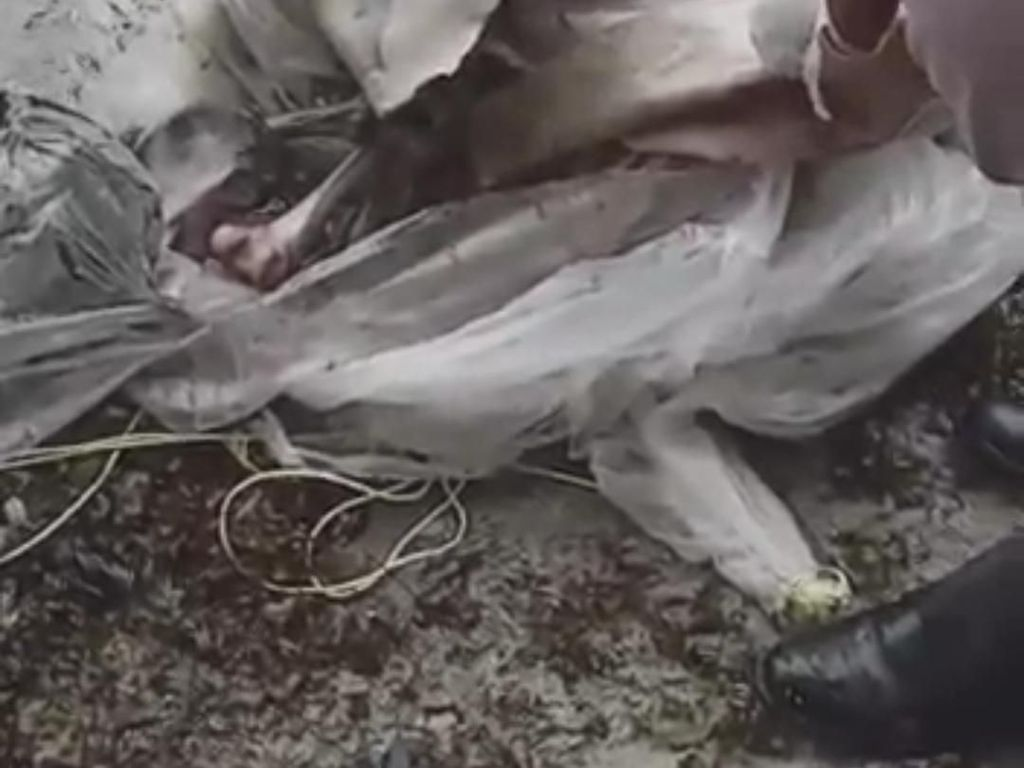 Video Nelayan di Buton Temukan Tulang Manusia Tanpa Kepala