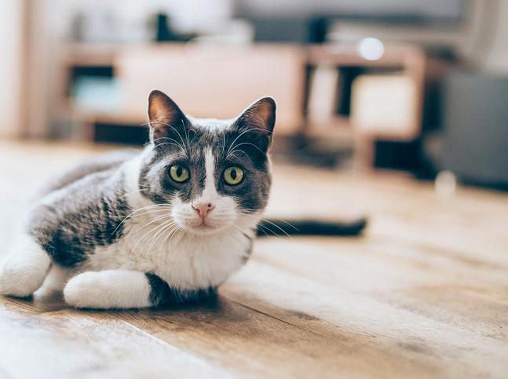 Fakta di Balik Video Viral 3 Perempuan Injak Kucing Sampai Mati