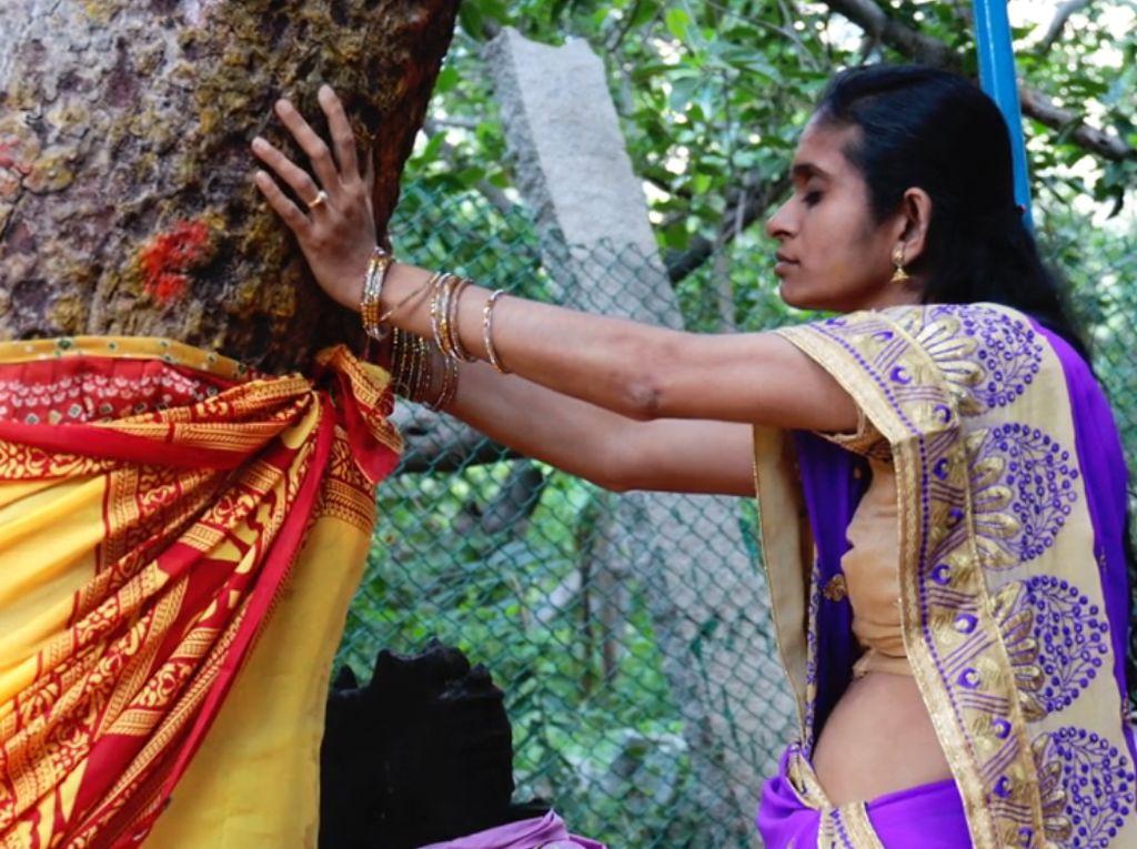 Pohon Beringin Berumur 550 Tahun Ini Ikon Jomblo Terbesar Dunia