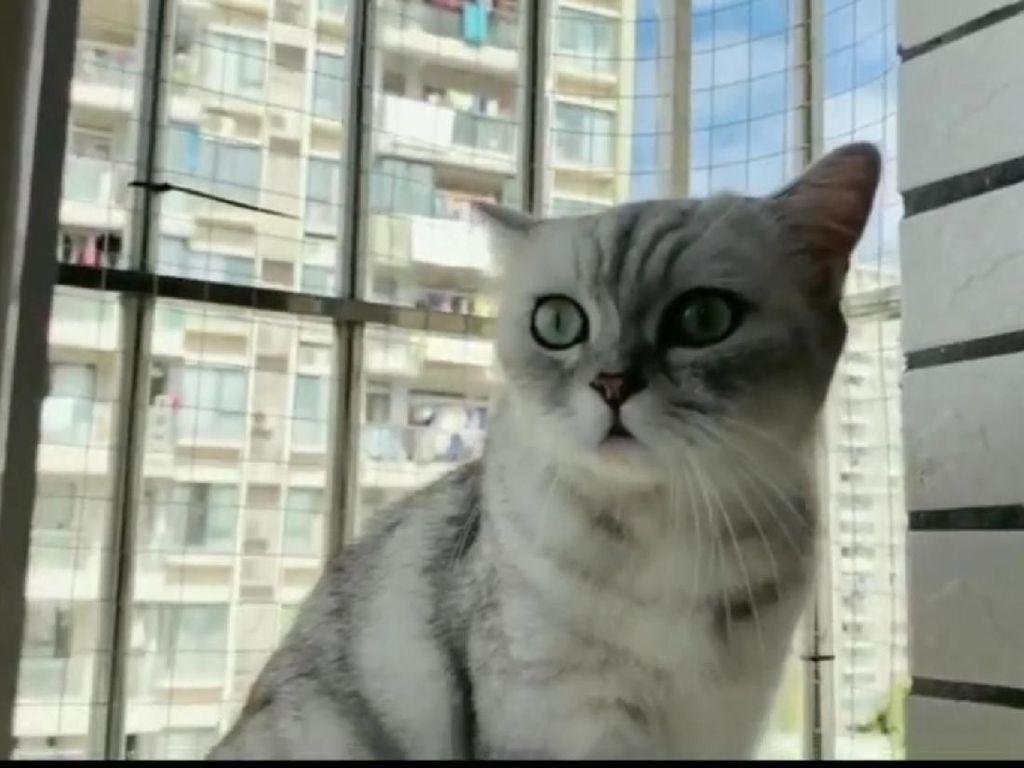 RubyEJ, Chef Kucing yang Jago Masak Ikan Sampai Ceker Ayam