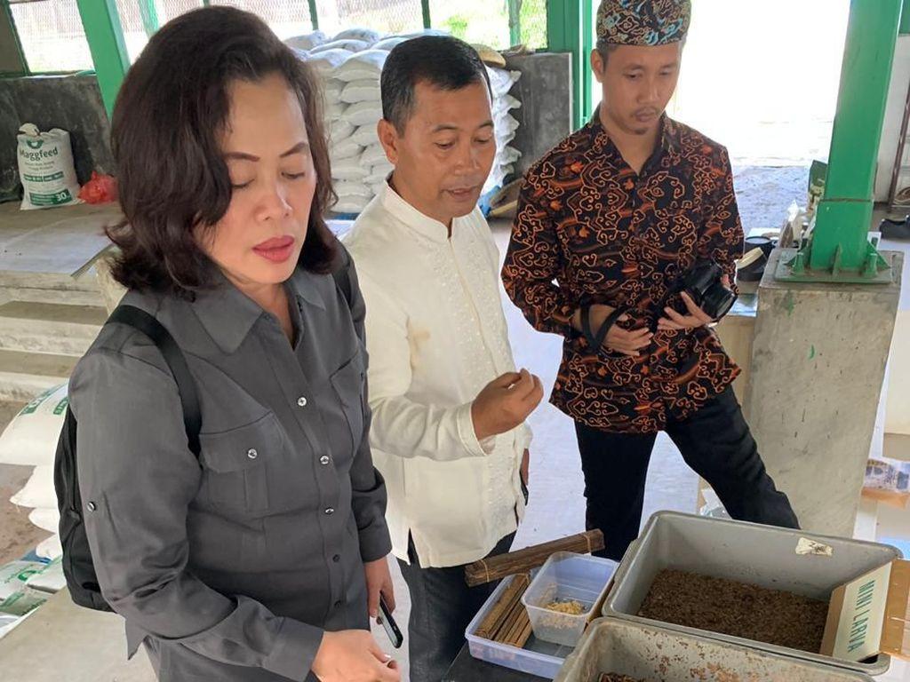 Harga Pakan Ikan Tinggi, KKP Masif Produksi Pakan Alternatif Magot