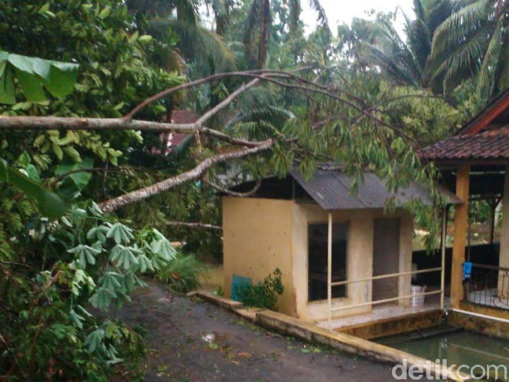 Hujan Angin Landa Ciamis, Pohon Tumbang Timpa Rumah dan Longsor