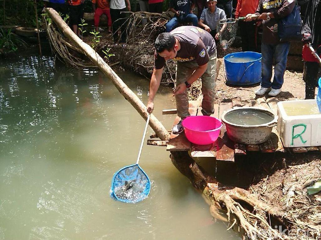 Lestarikan Telaga Mapahan, Bibit Ikan Ditebar dan Pohon Ditanam