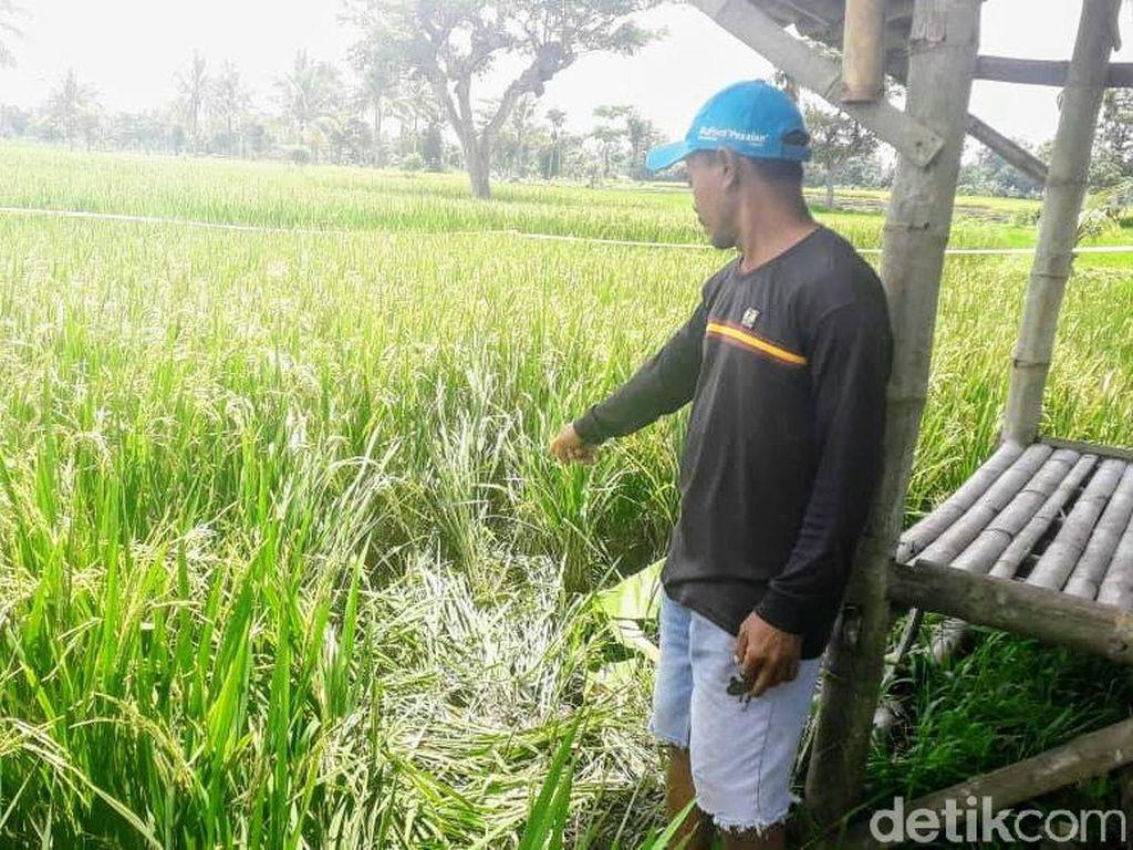 Begini Upaya Polisi Temukan Kepala dari Mayat yang Terpenggal di Bondowoso