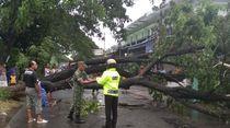 Hujan Angin di Klaten Robohkan Rumah dan Tumbangkan Pohon