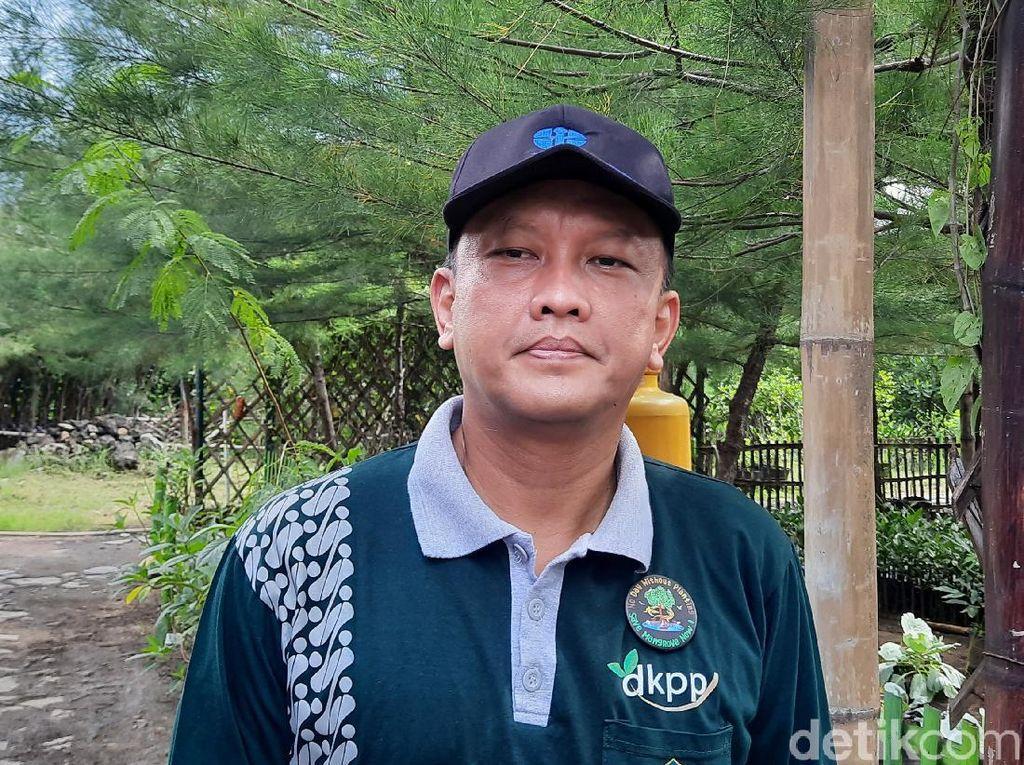 Kunang-kunang di Hutan Mangrove Surabaya Kejutkan Peneliti Jepang