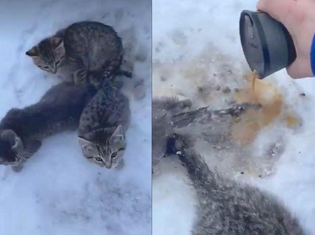 Gunakan Kopi Hangat Untuk Selamatkan Anak Kucing yang Beku, Pria Ini Panen Pujian