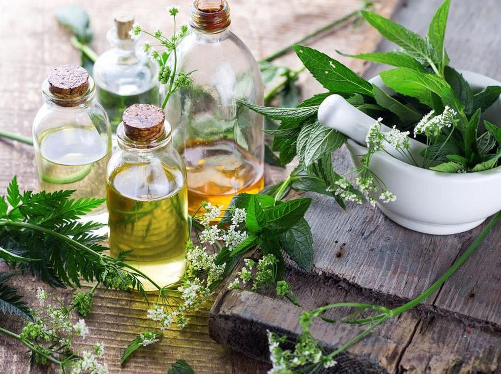 Ini yang Harus Diperhatikan untuk Produksi Obat Herbal