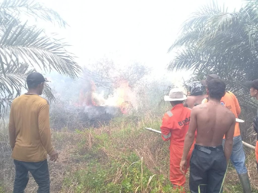 12 Hektare Lahan Sawit di Agam Sumbar Terbakar