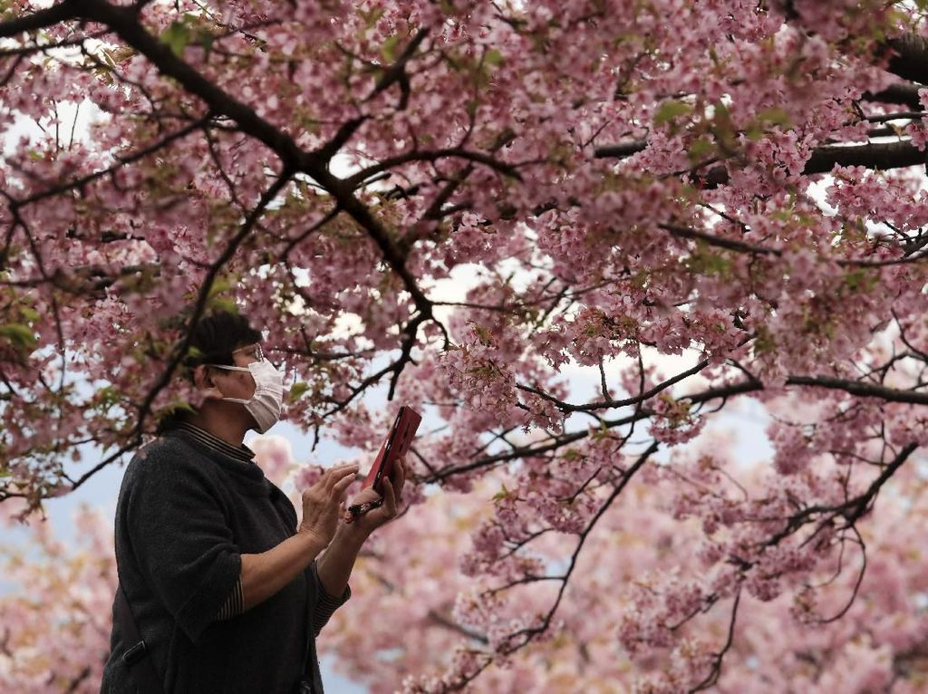 10 Taman Bunga yang Menawan di Seluruh Dunia saat Wabah Corona Melanda