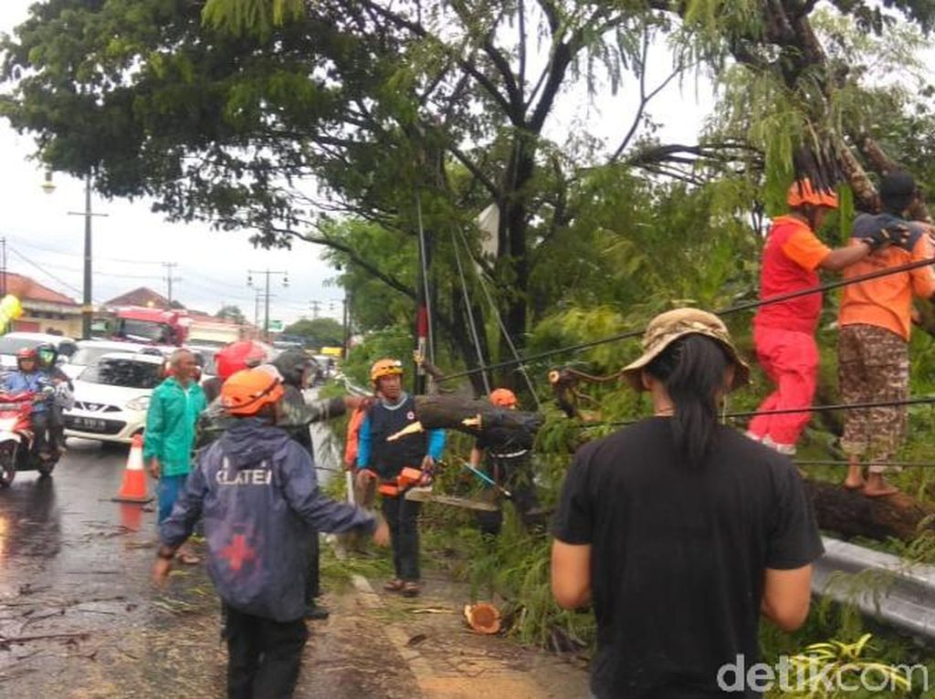 Pohon Tumbang ke Badan Jalan, Lalin di Rute Yogya-Klaten Tersendat