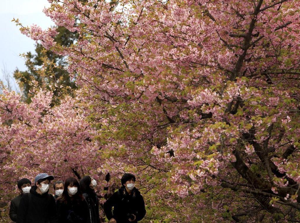 Maaf, Tak Ada Pesta Sakura di Tokyo Karena Virus Corona