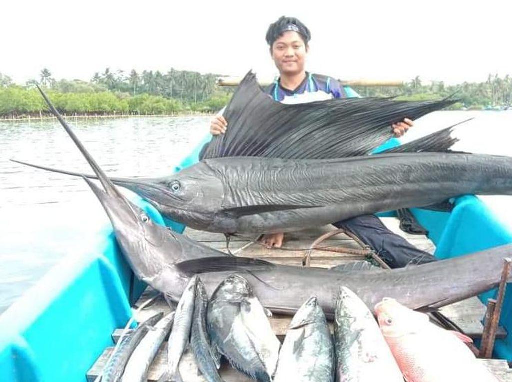 Jangilus, Nama Lokal Ikan Marlin Favorit Pemancing di Pangandaran