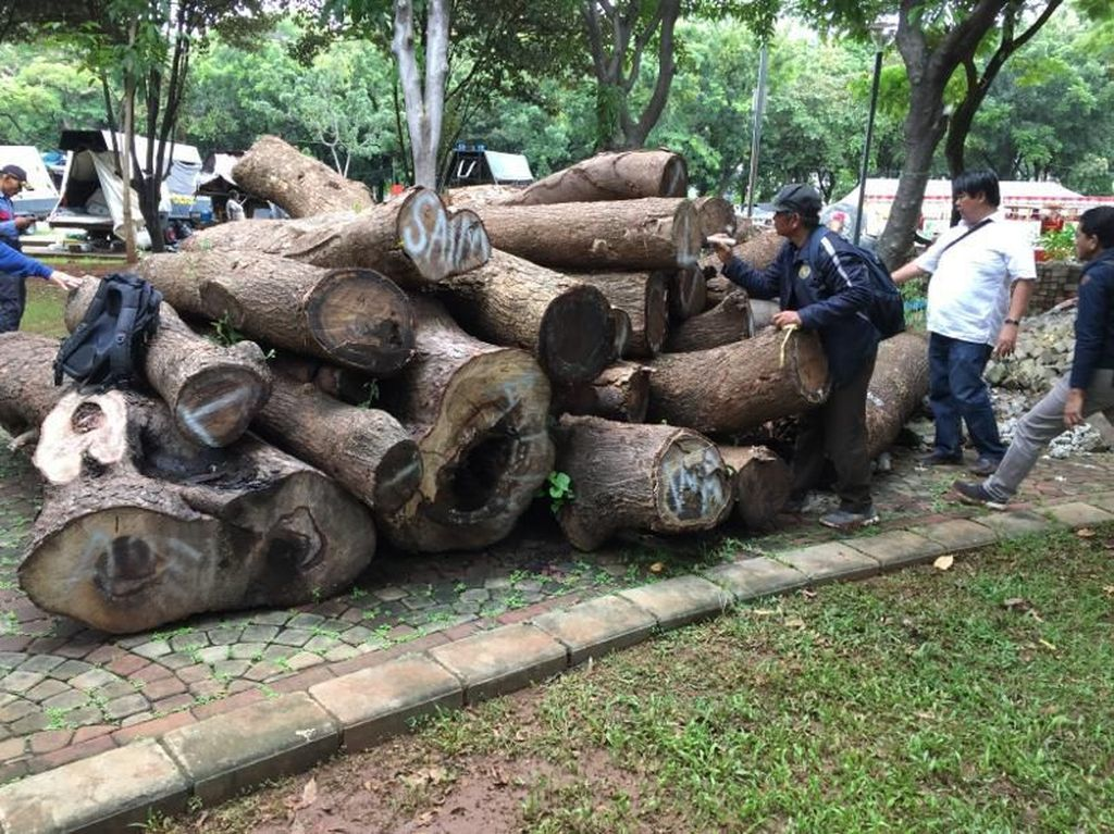 Urutan Misteri Penebangan Pohon di Monas yang Kini Jadi Gelondongan