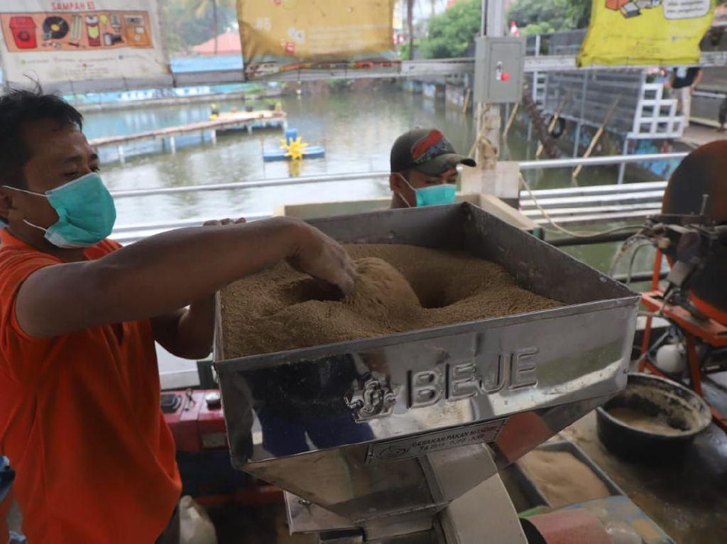 Jadi Alternatif Pakan Ikan, KKP Akan Bangun 7 Unit Percontohan Maggot