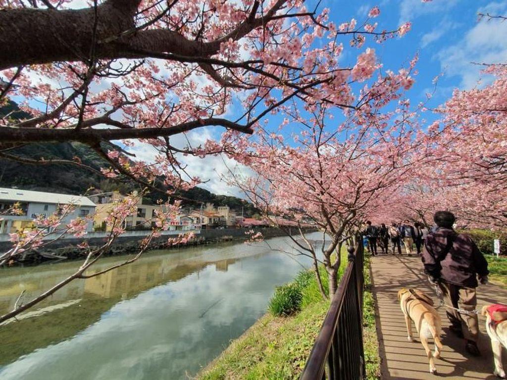 Jepang Tak Terima Wisatawan Indonesia Hingga April