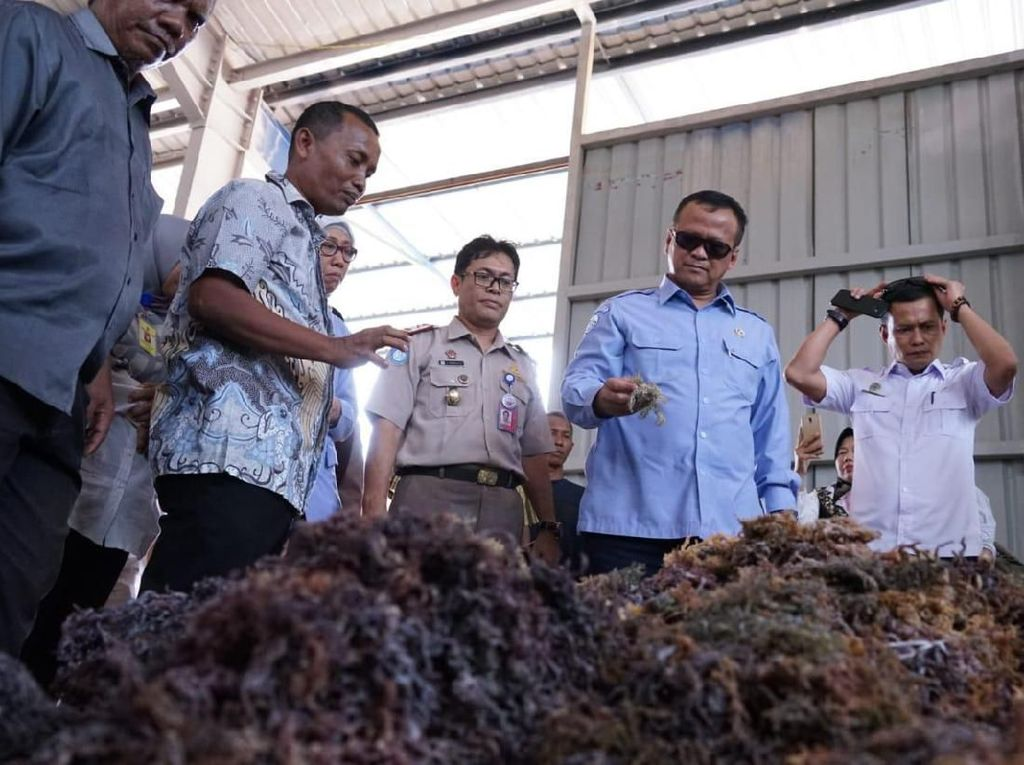Menteri KKP Lepas Ekspor 53 Ton Rumput Laut ke China