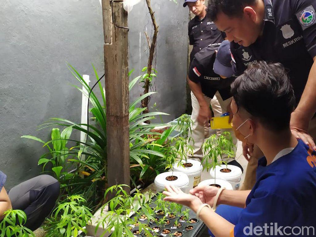 Merasa Cerdik Tanam Ganja Hidroponik, Penjual Kucing Ini Justru Tak Berkutik