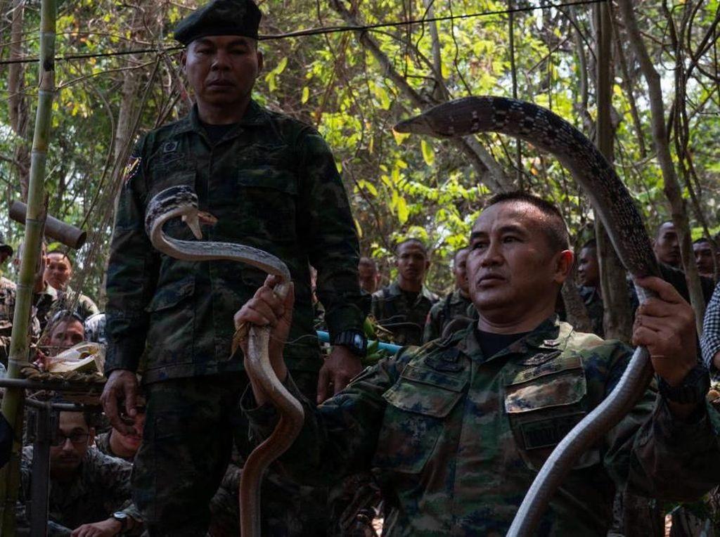 Latihan di Thailand, Marinir Amerika Makan Tokek hingga Minum Darah Ular