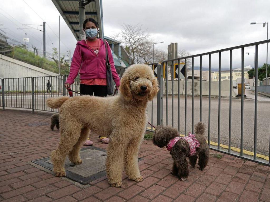 Selain Manusia, Hewan Peliharaan di Hong Kong Juga Terinfeksi Virus Corona