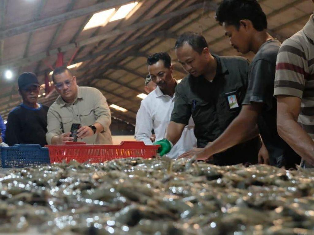 219 Petambak Udang Binaan Pertamina Dapat Kesempatan Ikut Sertifikasi