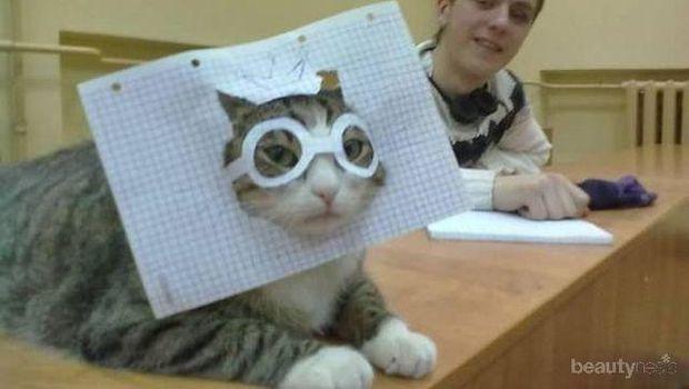 Ini yang Terjadi Jika Para Majikan Usil pada Kucingnya
