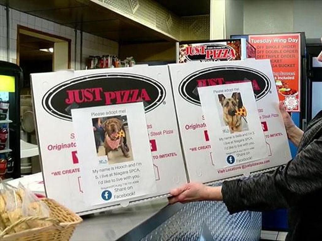 Unik! Gerai Pizza Ini Iklankan Anjing Jalanan agar Diadopsi