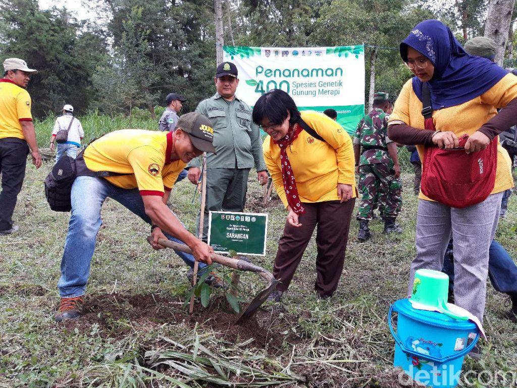 6 Jenis Pohon Langka Ditanam di Hutan Konservasi Gunung Merapi