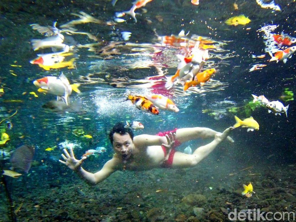 Asyik! Di Pemandian Ini Bisa Selfie Under Water Bareng Ikan
