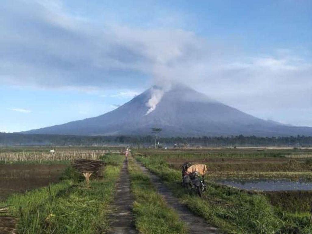 Aktivitas Guguran Lava Pijar Gunung Semeru Menurun