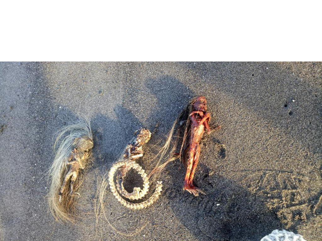 Heboh Warga Temukan 3 Kerangka Mirip Jenglot di Pantai Padang Galak Bali