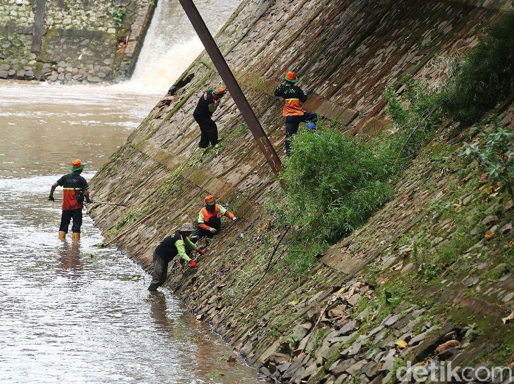 Aksi Petugas Bersih-bersih Kali Baru Timur