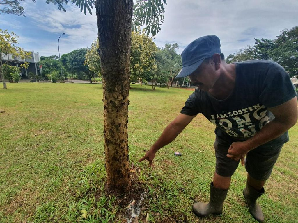 Ribuan Ulat Bulu Menyerang di Perumahan di Bekasi, Ini Penyebabnya