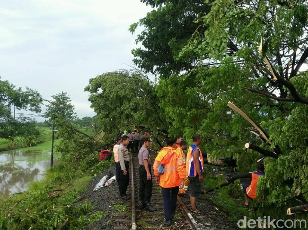 Hujan Deras Disertai Angin Kencang, 6 Pohon Tumbang di Jalur KA Pasuruan