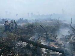 30 Hektare Hutan di Aceh Jaya Terbakar Diduga Akibat Pembukaan Lahan