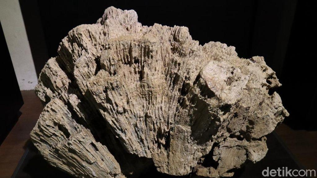 Foto: Batu-batu Tak Biasa di Museum Geologi Bandung