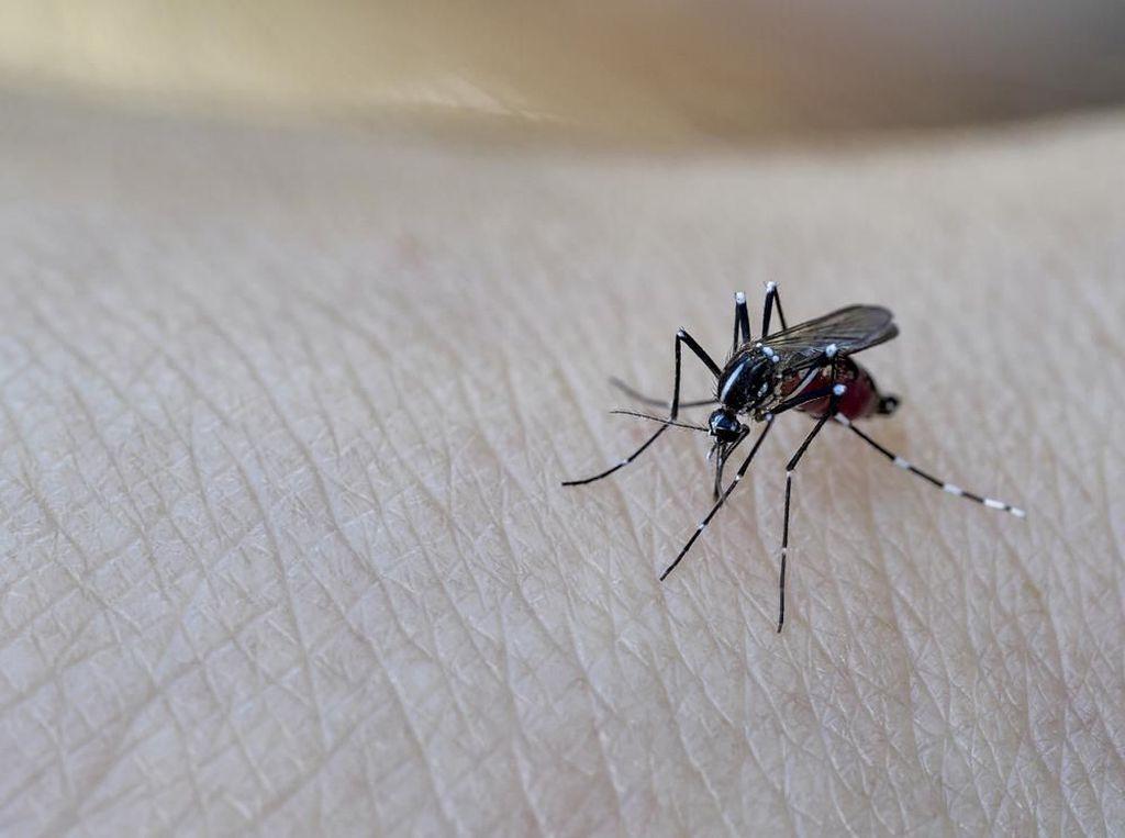 Awas! Pagi dan Sore Waktu Paling Rawan Gigitan Nyamuk DBD