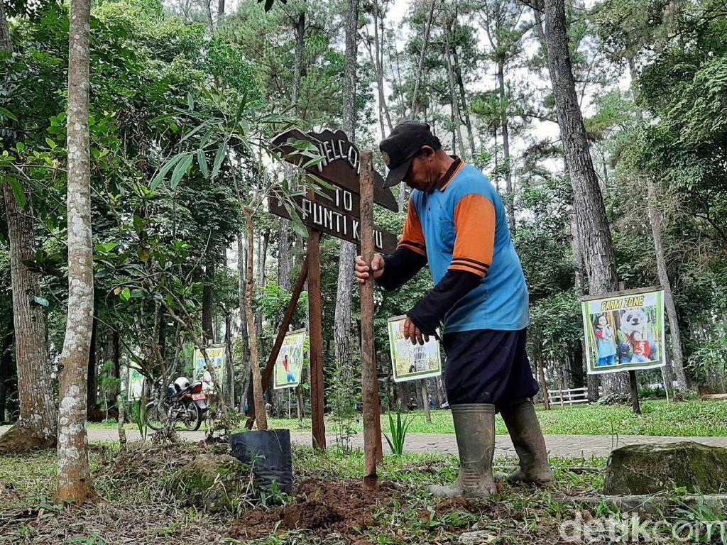 Ada 700 Ribu Hektare Hutan di Sumsel Kritis, KLHK Reboisasi-Bagikan Bibit