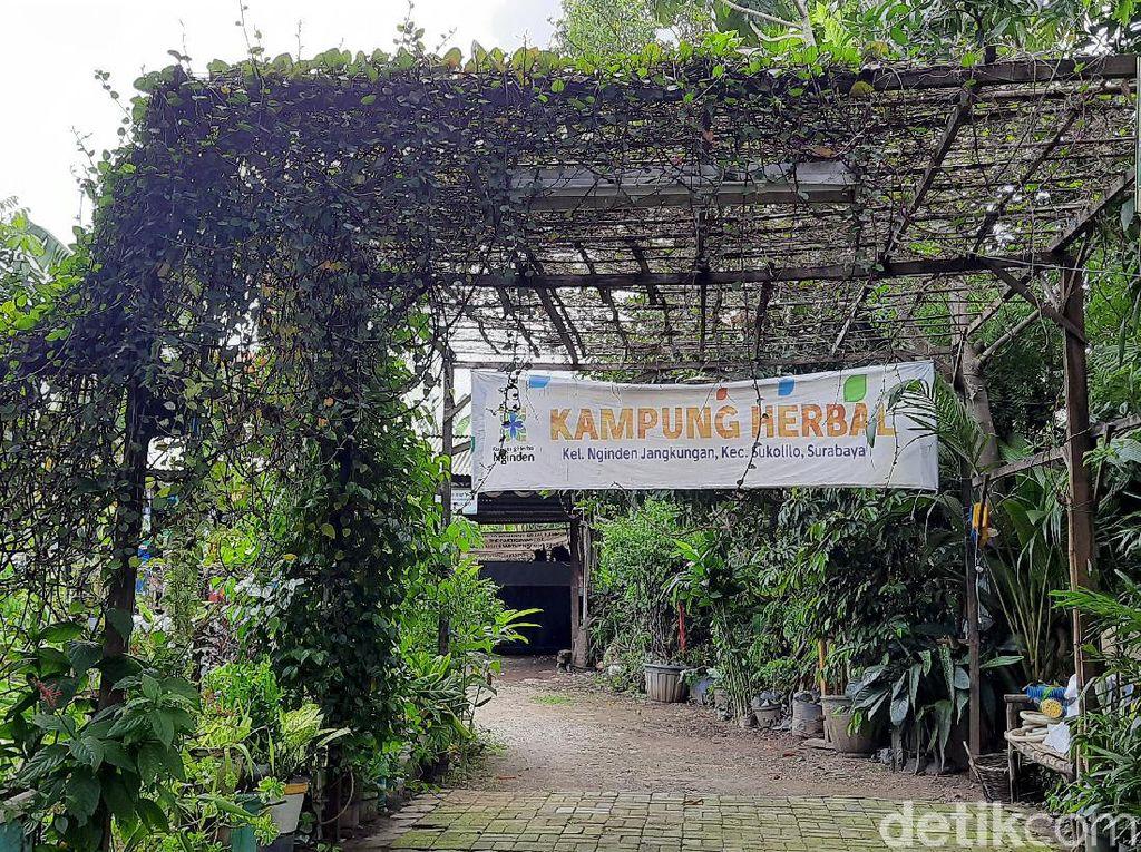 Kampung Herbal di Surabaya Punya Tanaman Empon-empon Komplit, Intip Yuk