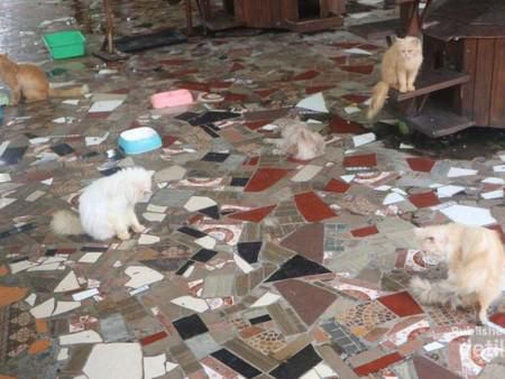 Gemasnya, Main Bersama Kucing Persia di Floating Market