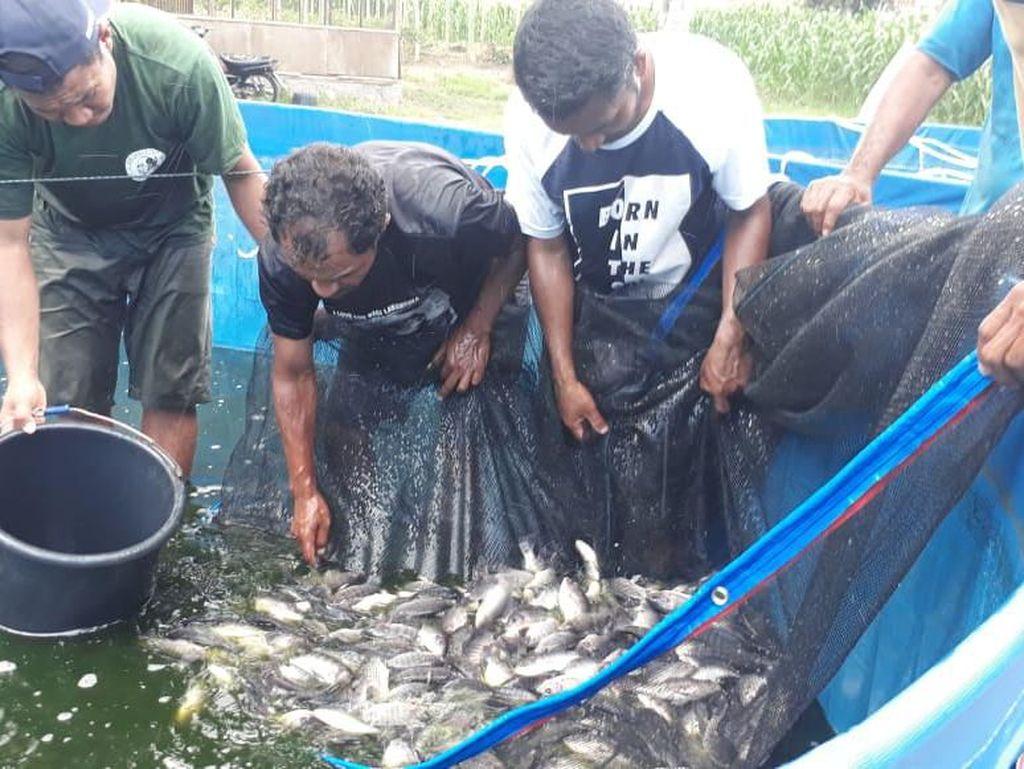 KKP Optimistis Konsumsi Ikan Bioflok Bisa Turunkan Stunting