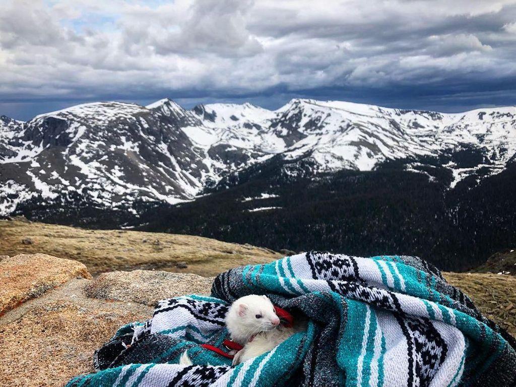 Potret Musang Putih yang Suka Traveling, Kamu Enggak Boleh Ngiri!