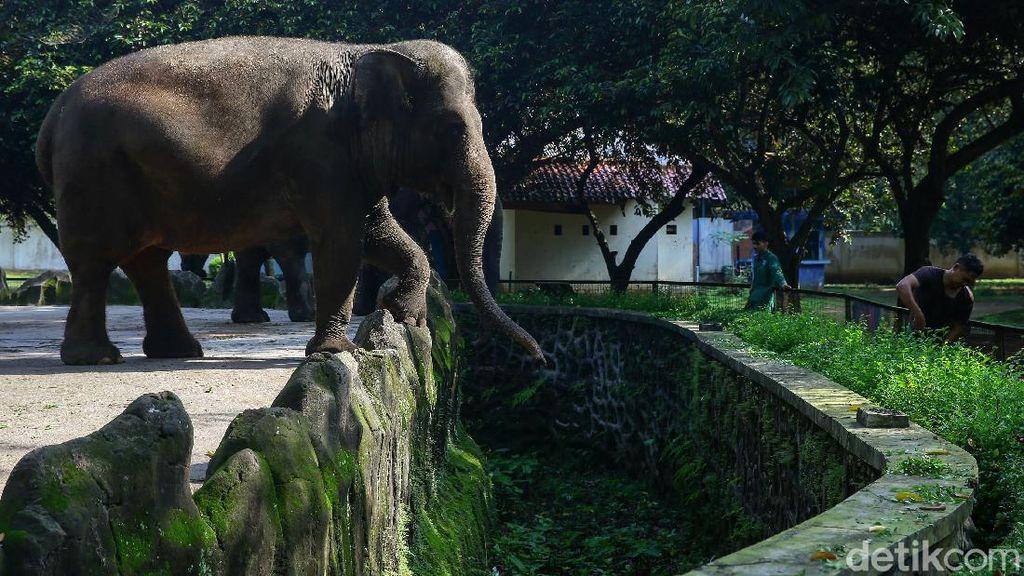 Kebun Binatang Ragunan Ditutup Imbas Corona